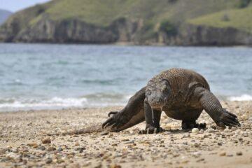 28٪ من 138000 نوع تم تقييمها تواجه الآن الانقراض: هيئة الحفظ | اخبار العالم UICN Marseille